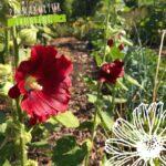 Permakultur Frühling – Ab sofort ist anmelden möglich