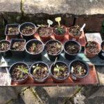 Pflanzen verschenken am 17. April 2021