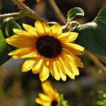 Schlierbacher Gärten werden dieses Jahr so schön wie nie zuvor – Pflanzentauschbörse 2020