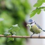 1000 Arten – 1000 Gärten Kampagne – Wer macht noch mit?